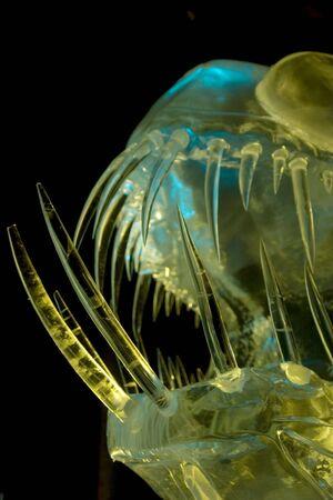 FROZEN deepwater fish