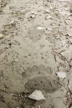 Do you know the feeling when you see a track of a bear on a trail you walk? Yeah! This is it... The whole bouquet of emitions... Fresh bear tracks in this image