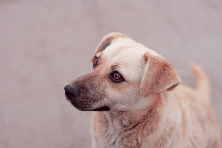 sch�ne augen: dog with beautiful eyes sitting alone and looking away Lizenzfreie Bilder