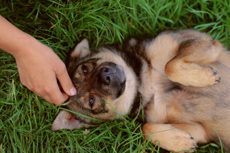 caresses: Dog lying on his back and is glad that the stroking arm