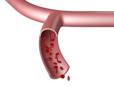 vessel: blood vessel cells and hemoglobin Hb on white background