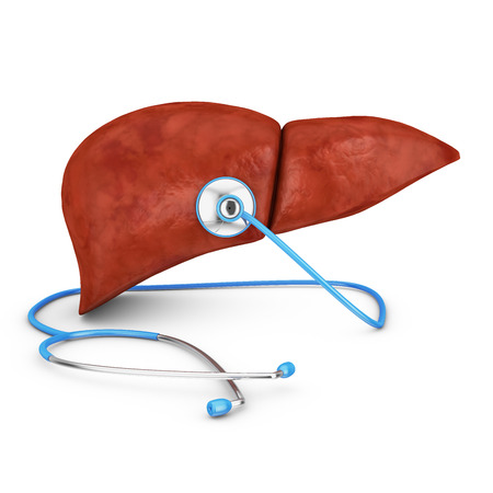 human liver and a stethoscope on a white background photo