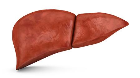 白の背景、3 d に人間の肝臓をレンダリングします。