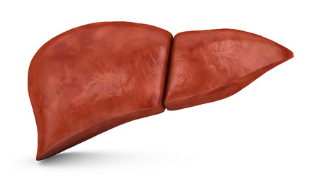 hepatic: human liver on a white background, 3d render