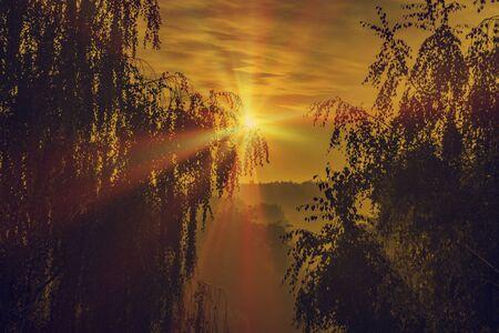 orange sunset: orange sunset on a background of trees