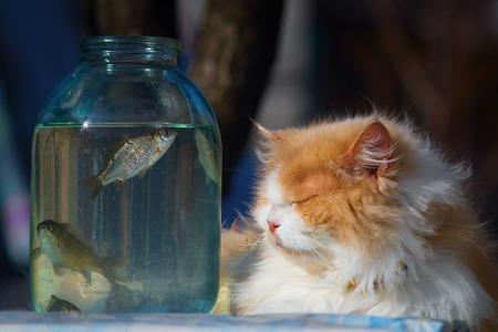 In muschi fisch der Fisch in