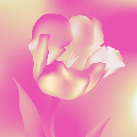 flower  tulips flower, spring, petal, tulip, isolated, background, blossom, bouquet, plant, floral, leaf,