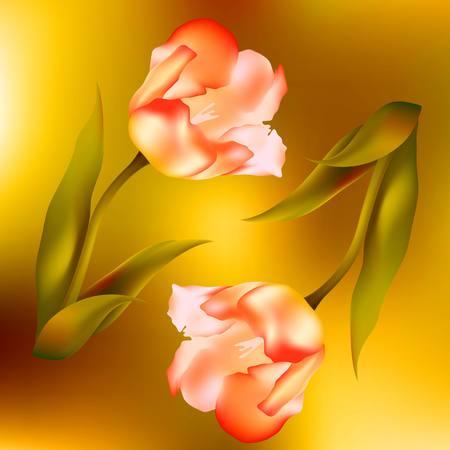 petal: flower  tulips flower, spring, petal, tulip, isolated, background, blossom, bouquet, plant, floral, leaf,