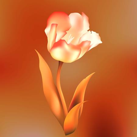 deep pink: flower  tulips flower, spring, petal, tulip, isolated, background, blossom, bouquet, plant, floral, leaf,