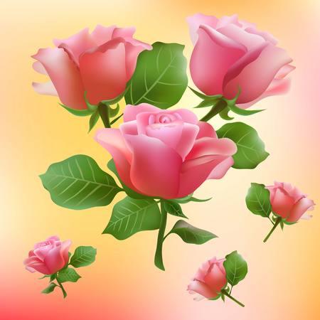 petal: flower, rose, blossom, bloom, floral, background, summer, spring, petal, garden, plant, nature, beauty, beautiful, pattern,