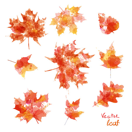 leaves green: Vector watercolor autumn leaves maple leaf art flora Illustration