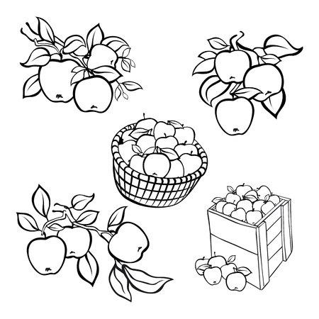 fully editable: Vintage black apple harvest set. Fully editable EPS10 vector. art
