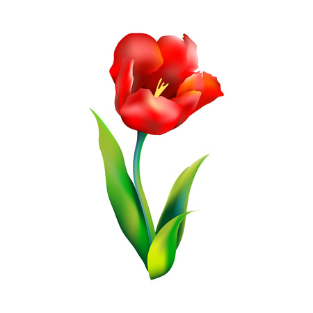 Bloem van de tulp, vector illustration art rode flora