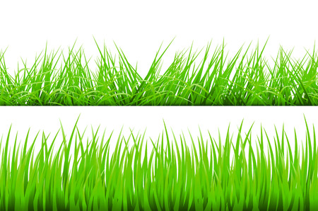 grass blades: Green Grass Border, Vector Illustration art