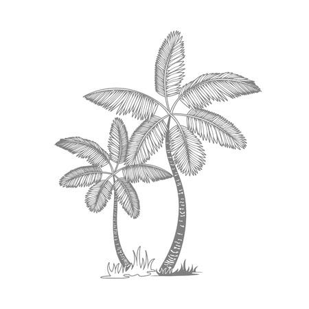 grey line palm tree isolated white background art