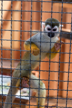 In the monkey cage at the zoo  Stock Photo - 15174101