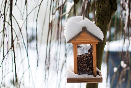 Wooden birdhouse covered with snow  in winter photo