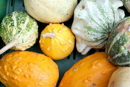 Fresh healthy bio pumpkin on German farmer agricultural market Stock Photo - 15755576
