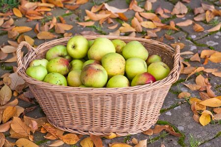Crop of green and yellow apples in basket photo