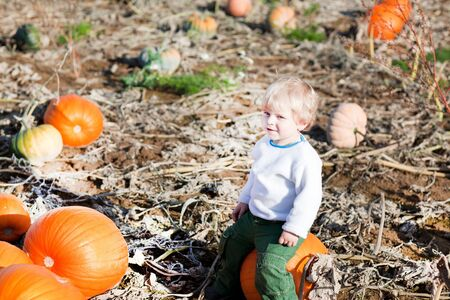 Happy little toddler boy on pumpkin field on sunny autumn day photo