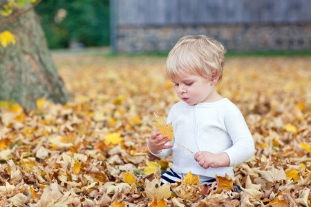 Little toddler boy playing with yellow leaves in autumn park on sunny day photo