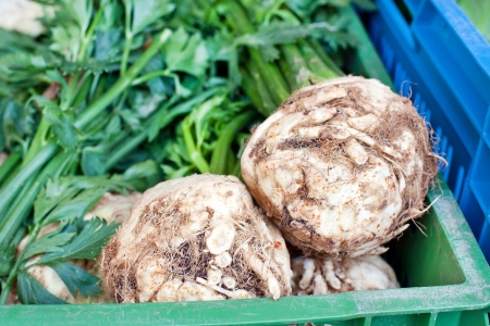 Fresh healthy bio rutabaga on German farmer agricultural market Stock Photo - 16549913
