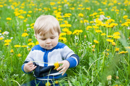 Beautiful baby boy in yellow flowers field summer Stock Photo - 17213317