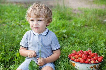 Little blond boy with bowl strawberries on organic berry farm photo