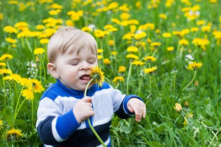 Beautiful baby boy in yellow flowers field summer Stock Photo - 18127730