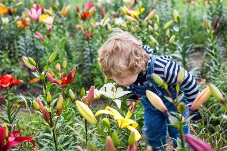 Little toddler boy on lily field in summer, Germany Stock Photo - 18267387