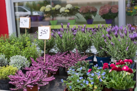 Spring flowers in florist shop, Germany. photo