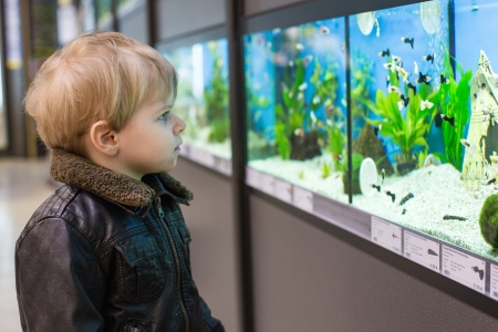 Little toddler boy watches fishes in aquarium