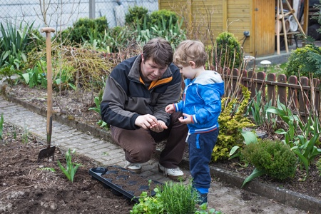Little toddler boy and his father planting seeds in vegetable garden photo