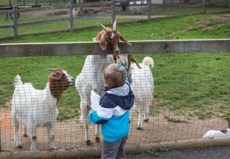 Little toddler boy feeding animals in zoo in summer