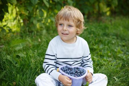 Little boy bucket of blueberry on organic self pick farm in Germany photo