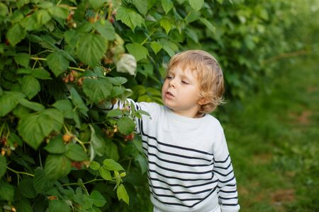 Beautiful boy with raspberries on organic self pick farm in Germany photo