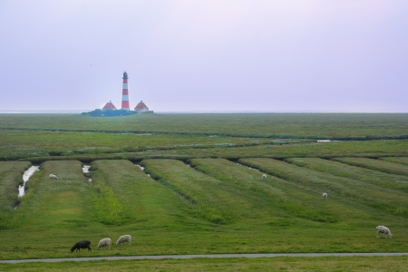 Landscape of North Sea region with lighthouse and sheeps photo