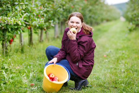 Young woman eating red apples in an orchard. photo