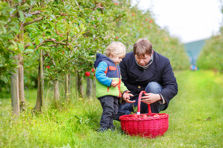 Adorable toddler boy of two years and his father picking red apples in an orchard. photo