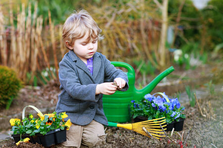 Blond boy of 2 years having fun with gardening and planting vegetable plants and flowers in garden, outdoors photo