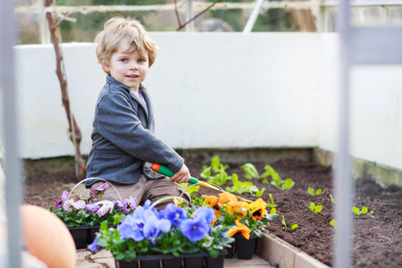 Little boy gardening and planting vegetable plants and flowers in garden, outdoors photo