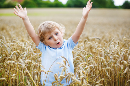 Preschool boy of 3 years with blond hairs having fun in wheat field in summer, outdoors photo