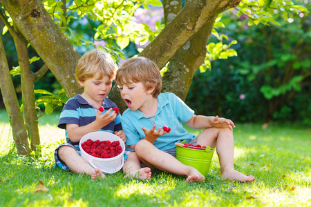 family eating: Two adorable little sibling kids eating raspberries in homes garden, outdoors. Feeding each other Stock Photo