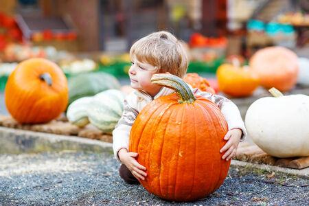Little cute kid boy sitting with huge pumpkin on halloween or thanksgiving harvest festival or patch, outdoors Zdjęcie Seryjne