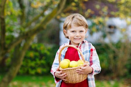 Preschool kid boy with fresh apples in homes garden, outdoors. Own harvest.