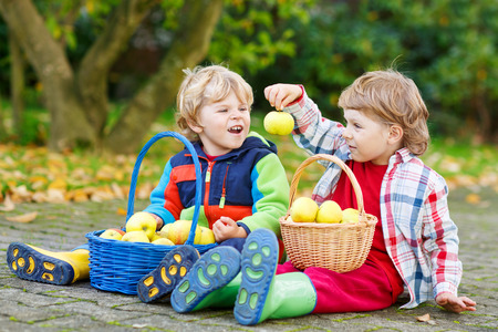 Two adorable boy friends eating apples in homes garden, outdoors. Own harvest. Boys in colorful rubber boots on autumn day. Stock Photo