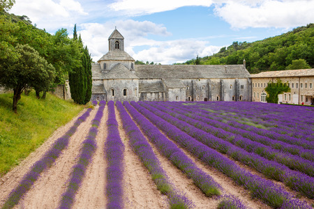 gordes: Abbey of Senanque and blooming rows lavender flowers. Gordes, Luberon, Vaucluse, Provence, France, Europe. Editorial