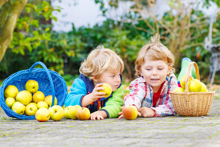 3 4 years: Two adorable little children eating apples in homes garden, outdoors. Own harvest. Boys in colorful rubber boots on autumn day. Stock Photo