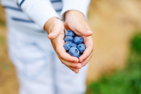 healthy snacks: Little boy holding blueberries on organic self pick farm. Funny child eating fresh berries as healthy snack for kids and adults. Hands of child.