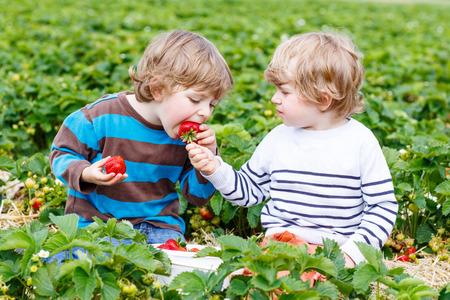 Twee kleine vrienden plezier op aardbei boerderij in de zomer. Voeden elkaar met biologische bessen en tijd doorbrengen samen. Schattig blond broer jongens het eten van gezonde bessen. Stockfoto